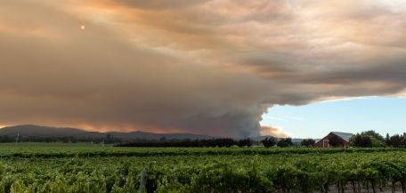 Climate Change Hits Wine Country