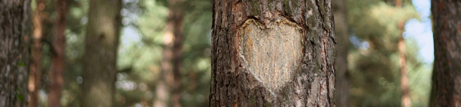 Tree with heart image
