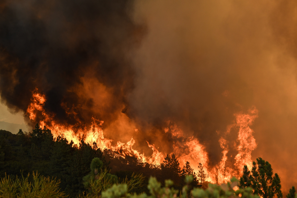 California Police Adopt WingtraOne Drone for Wildfire Damage Assessment